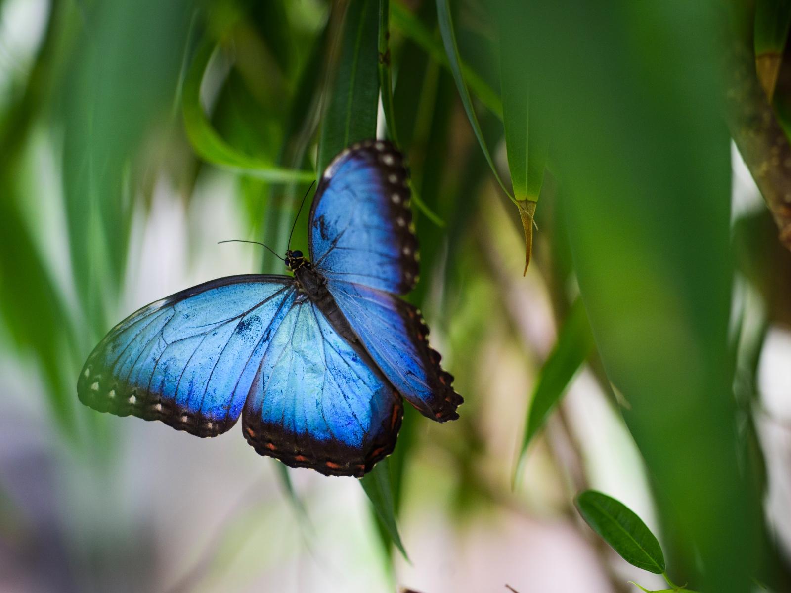 Niespotykane motyle
